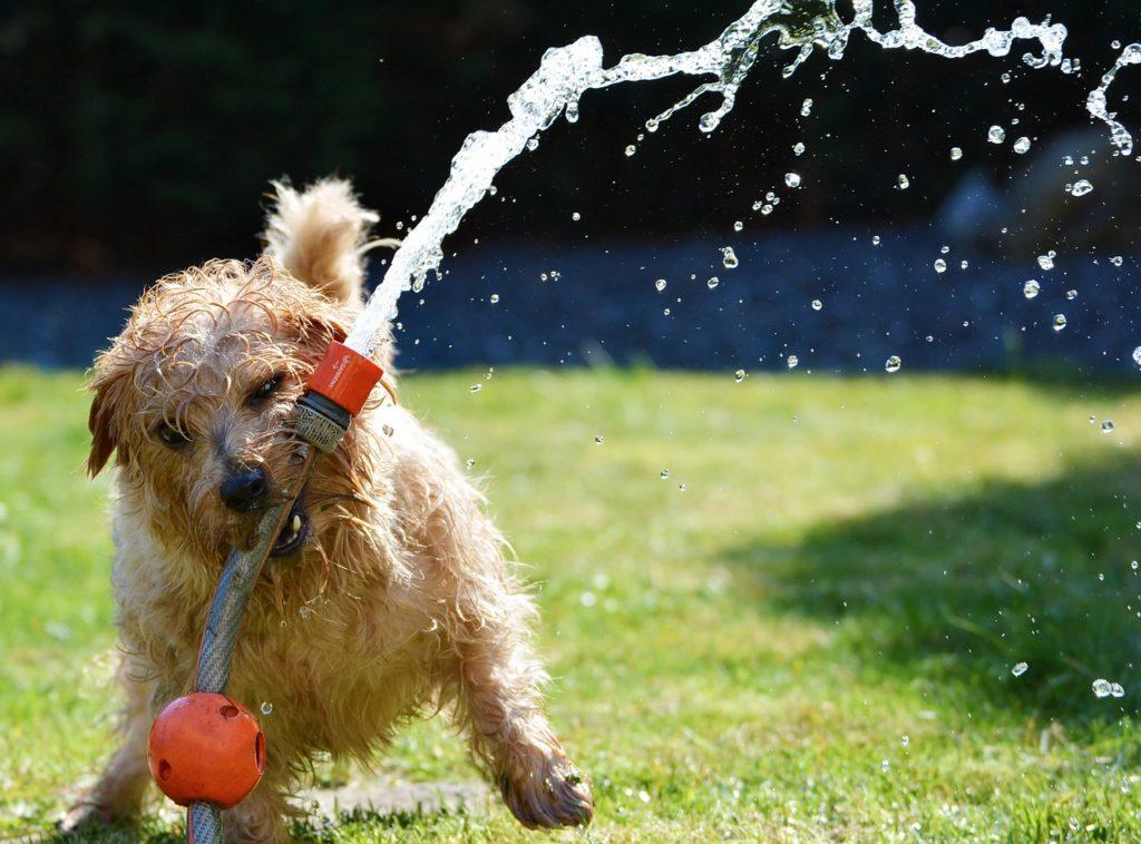 Dispensadores de agua para perros y gatos